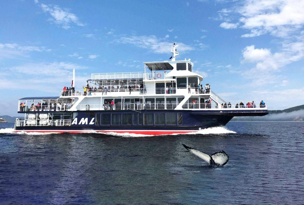 Croisière aux baleines en bateau