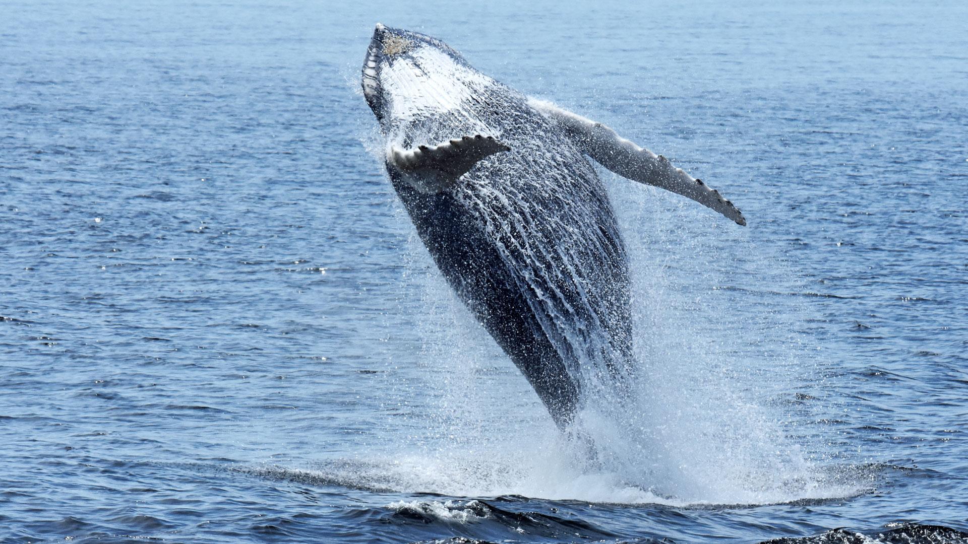 Croisière aux baleines et tour d'hélico