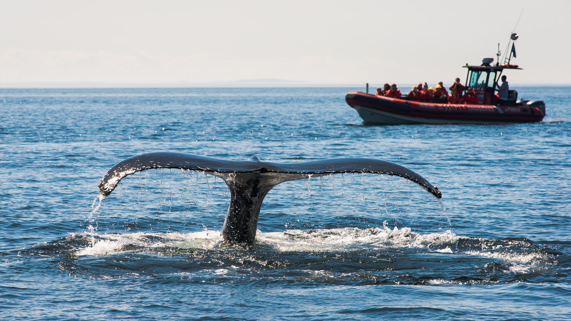 Croisière aux baleines
